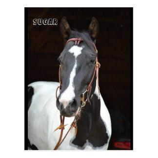 """Pinto Merrieveulen genoemd paardbriefkaart """"Suiker Briefkaart"""