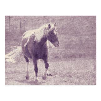 Pinto Pony Briefkaart