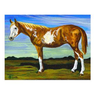 Pinto/van de Verf het Briefkaart van het Paard
