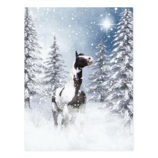 Pinto van de winter paard briefkaart