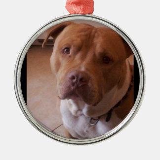 pitbull zilverkleurig rond ornament