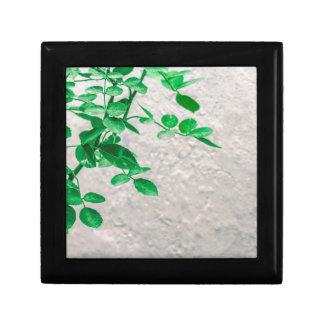 Plant over de Foto van de Muur Decoratiedoosje
