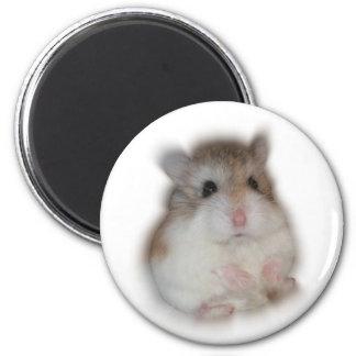 Pluis-bal - de Magneet van de Tic