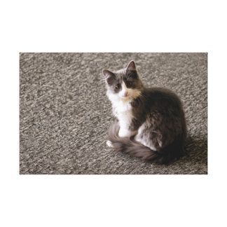 Pluizig katje canvas print