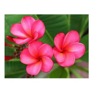 Plumeria - Miami nam op Briefkaart toe