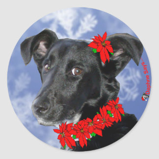 Poinsettia Daphne Ronde Sticker