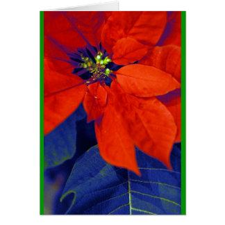 Poinsettia en blauwe bladeren kaart