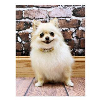 Pomeranian - de Kraag van de Ijdelheid Abby Briefkaart