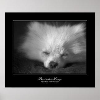 Pomeranian dut, zuivert de galerij-stijl van de poster