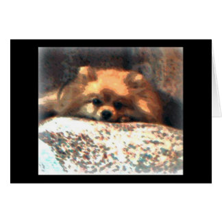 Pomeranian Notecard Briefkaarten 0