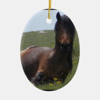 Pony die Ornamenten rusten