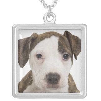 Portret van een pitbullpuppy ketting vierkant hangertje