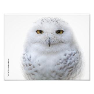 Portret van een SneeuwUil Fotoafdrukken