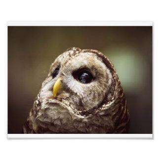 Portret van een Uil Fotoprints