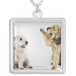 Portret van hond die bij een andere hond golven zilver vergulden ketting