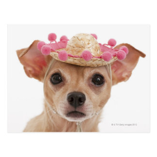 Portret van kleine hond in sombrero briefkaart