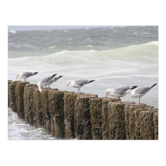 Postcard: Seagulls Briefkaart