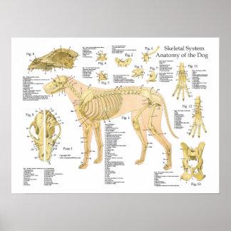 """Poster 18"""" X 24 """" van de Anatomie van de hond"""