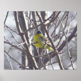 Poster - Gele Vogel in Takken
