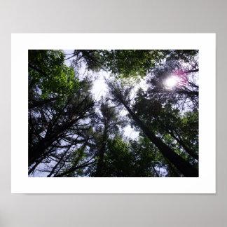 Poster van bomen in een bos