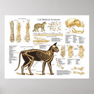 Poster van de Anatomie van de kat het Katachtige