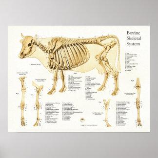 Poster van de Anatomie van de koe het Runder