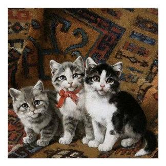 Poster van drie het Schattige Katjes