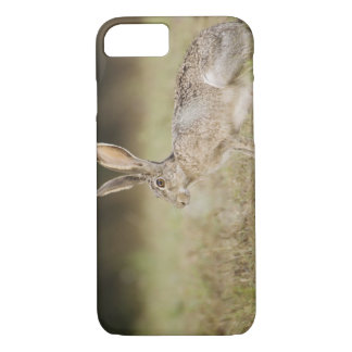 Prairiehaas met zwarte staart, californicus Lepus, iPhone 7 Hoesje