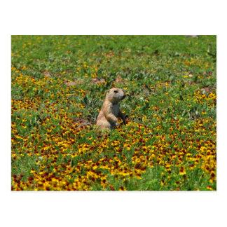 Prairiehond in Bloemen Briefkaart