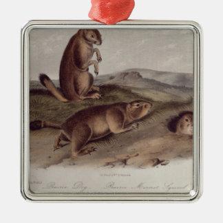 Prairiehond van 'Viervoeters van North America Zilverkleurig Vierkant Ornament