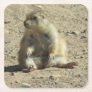 Prairiehond Vierkante Onderzetter