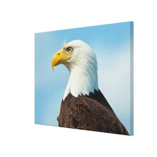 Profiel van Kaal Eagle Canvas Afdruk