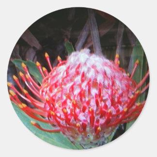 Protea Ronde Sticker