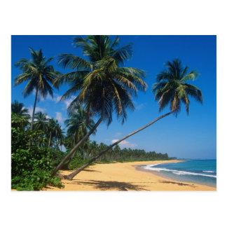 Puerto Rico, Isla Verde, palmbomen Briefkaart