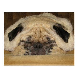 Pug van de slaap Briefkaart