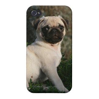 Pug van Fawn de Zitting van het Puppy iPhone 4/4S Hoesjes