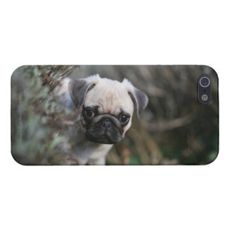 Pug van Fawn Puppy Headshot iPhone 5 Cover