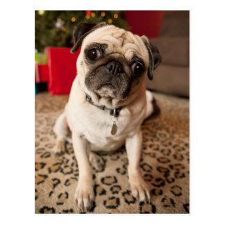 Pug zitting op tapijt, Kerstboom Briefkaart