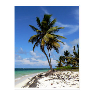 Punta Cana, Dominicaanse Republiek, kokosnotenpalm Briefkaart