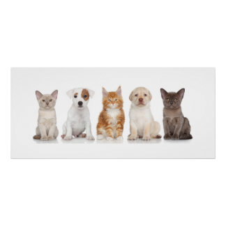 Puppy en Katjes - Poster - srf