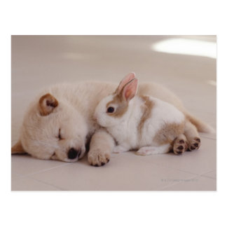 Puppy en Konijn Briefkaart