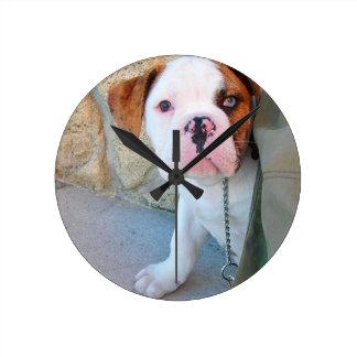 Puppy van de Buldog van Olde het Engelse Ronde Klok