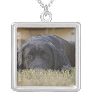Puppy. van de Labrador Ketting Vierkant Hangertje