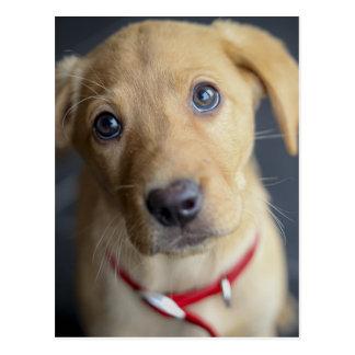Puppy van Labrador van de vos het Rode Briefkaart