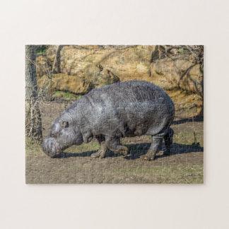 Pygmy raadsel van de hippofoto legpuzzel
