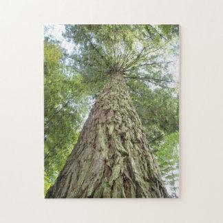 Raadsel van mooie bomen puzzel