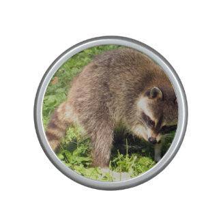 raccoon-24.jpg