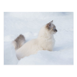 Ragdoll in het sneeuwbriefkaart briefkaart