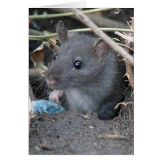 Rat in een gatenWenskaart Wenskaart