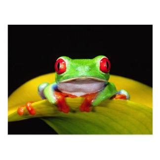Red Eye Treefrog, Agalychinis callidryas, Inwoner Briefkaart